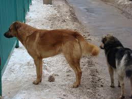 stray_dogs.jpg