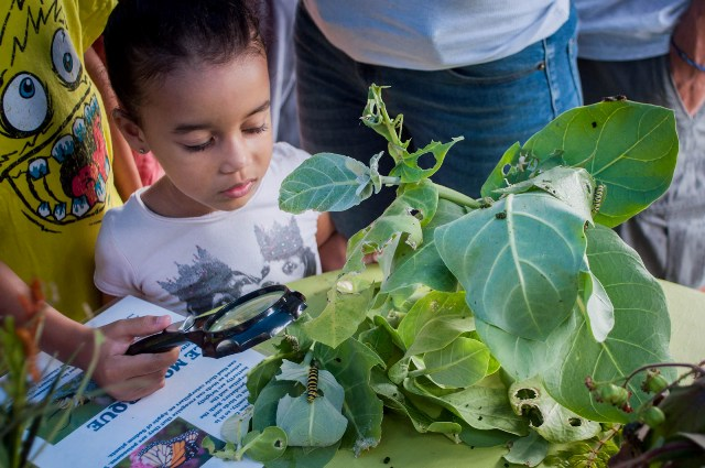 Kids and adults created extraordinary insects from natural materials at the event's Build-A-Bug Workshop. (Photo by Mark Yokoyama)
