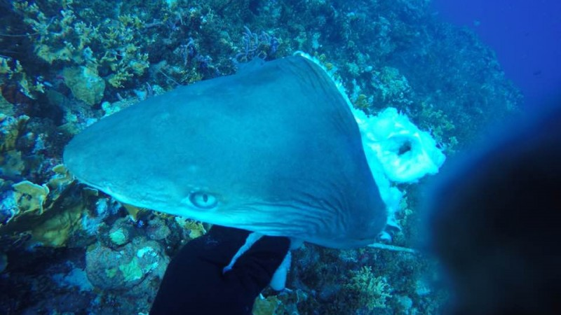 Expert meeting on the management of sharks in the Caribbean Netherlands