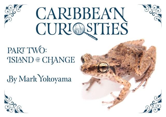 Caribbean-Curiosities-Island-of-Change.jpg