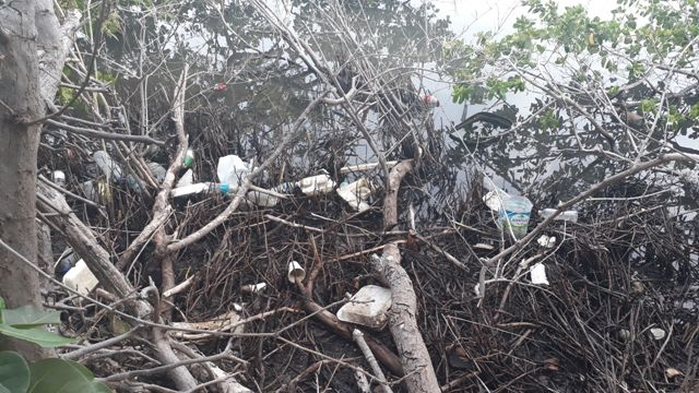 2-single-use-plastics-in-mangroves.jpg