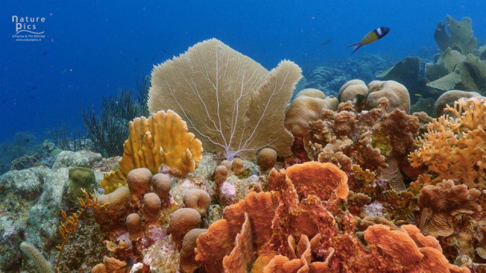 Coral-Reef-Photo-credit-Naturepics-Y.T.-Kuhnast.jpeg