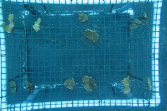 Coral-relocation-trial-picture-3.jpg
