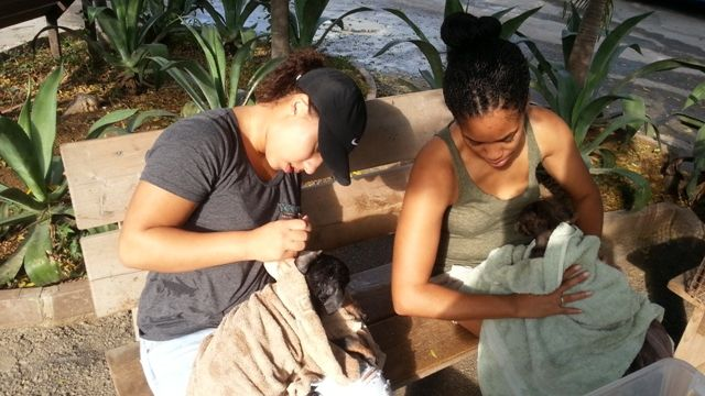 Curacao-Animal-Shelter-COMREL.jpg