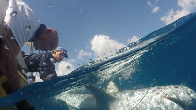 Shark-Research-Relaunched-.jpg