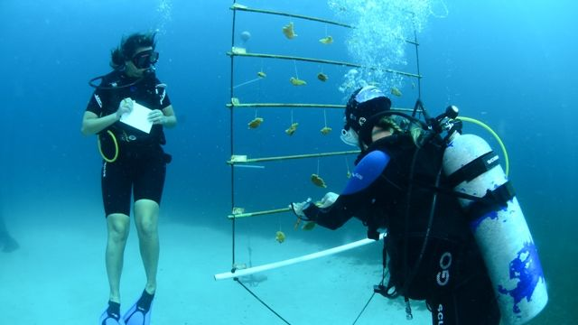 Womens-Dive-Day.jpg