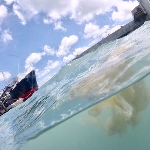 Nature Foundation Researching Pollution Related Algae Bloom in Simpson Bay Lagoon