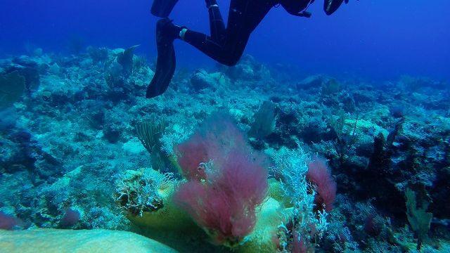 algae2.jpg