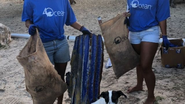 beach-cleanup-project.jpg