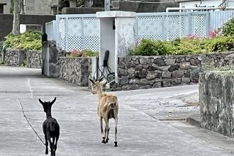 goats-roaming-the-street-in-The-Bottom-3-scaled.jpg