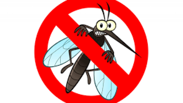 mosquito.png