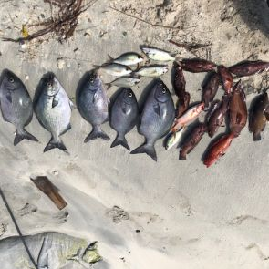 Nature Foundation Intercepts Poachers in Marine Park, Seized Fish Donated to White and Yellow Cross Foundation